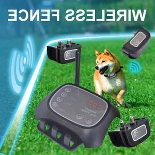 Harnais anti fugue pour chien et cloture anti fugue petsafe