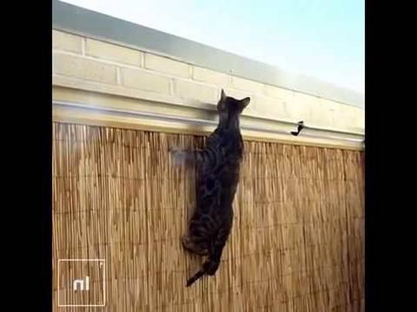 anti fugue chat rouleau