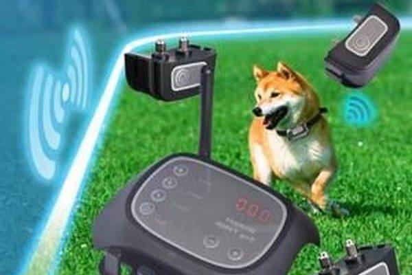 Collier anti fugue chien et clôture anti fugue sans fil wireless petsafe