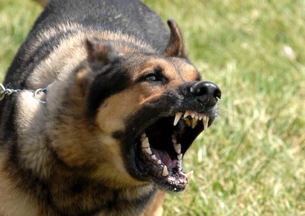 chien qui aboie bruit