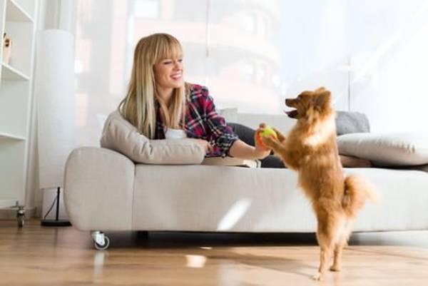Que faire quand un chien aboie tout le temps ou porter plainte aboiement chien