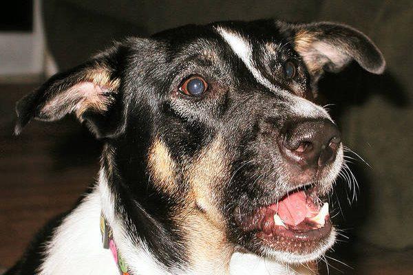Lettre aboiement chien voisin pour systeme anti aboiement exterieur pour chenil