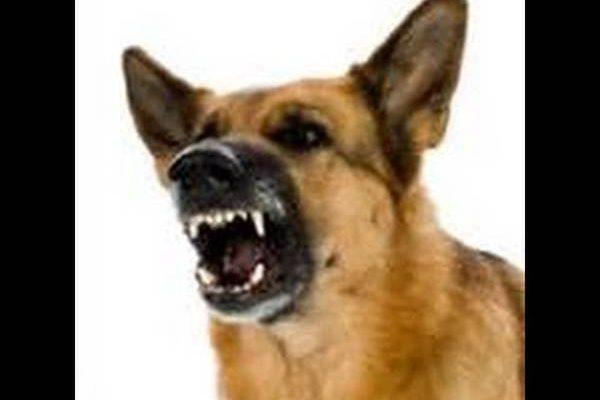 Chien qui aboie bizarrement / tolerance aboiement chien