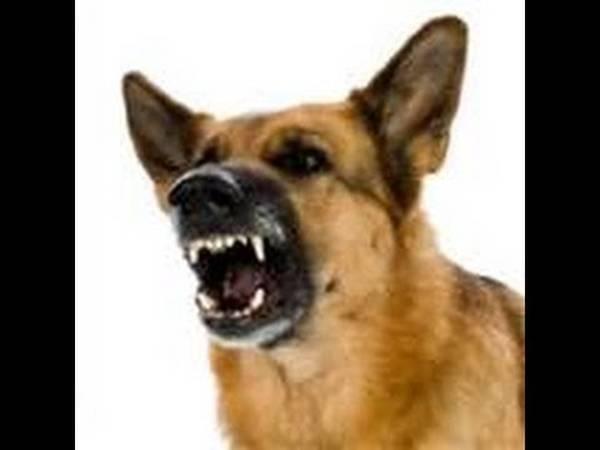 quand le chien aboie