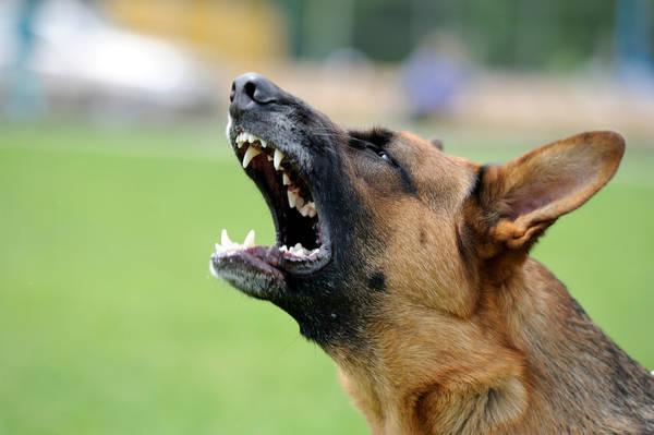 comment faire taire un chien qui aboie la nuit