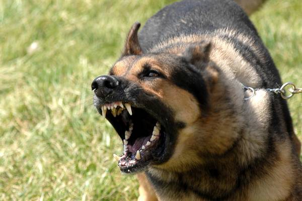 sonnette chien qui aboie