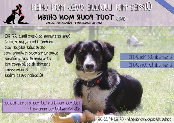 enregistrement d aboiement de chien