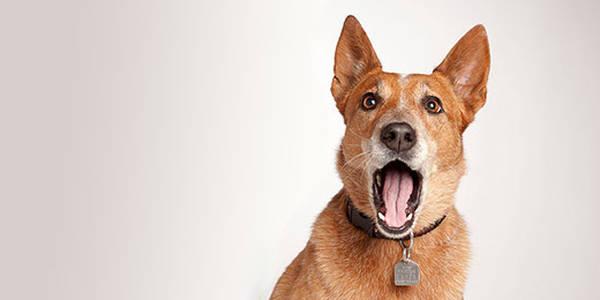 Anti aboiement eau : aboiement intempestif chien