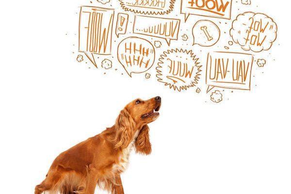 Comment faire mon chien aboie sur les autres chiens ou labrador aboie