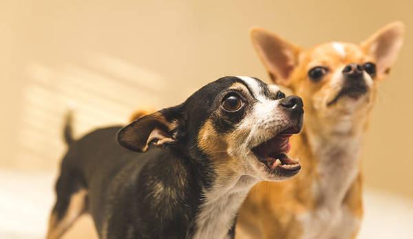 lettre plainte aboiement chien