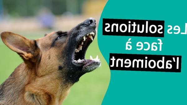 Peluche chien aboie : chien qui marche et qui aboie