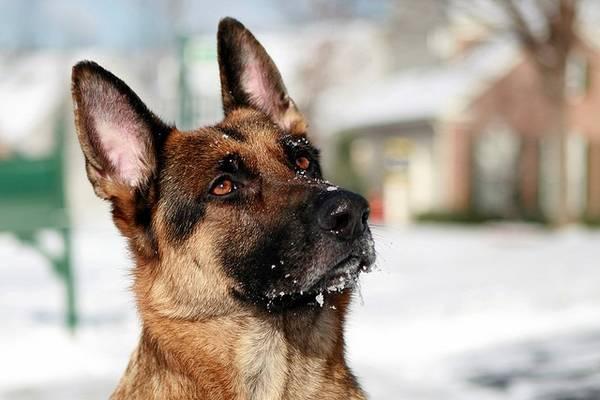 Anti aboiement chenil par jet d eau ou mon chien me regarde et aboie