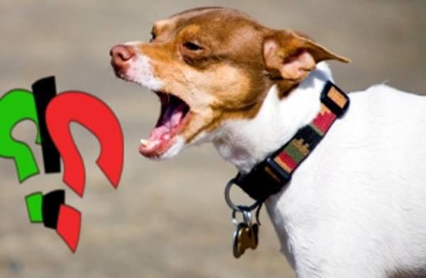 chien sourd qui aboie