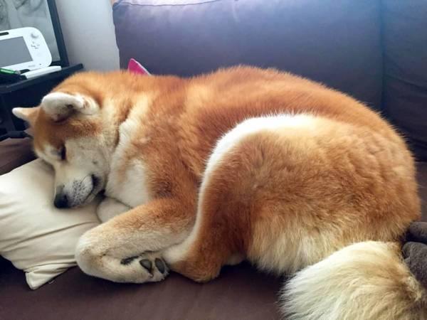 traduction aboiement chien
