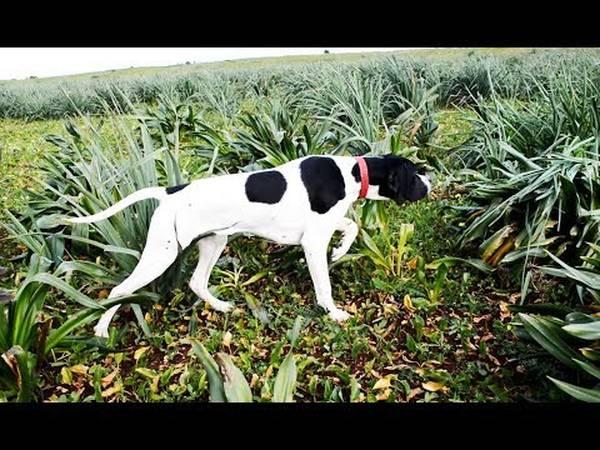 Costume de dressage pour chien occasion et tuto dressage chien