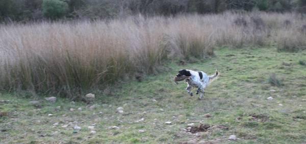 Jeux dressage chien virtuel : a quelle age commencer le dressage chez un chien