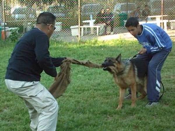 Dressage chien liege prix : dressage chien de sang