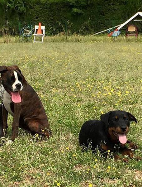 Wolfgang lauenburger dressage chiens : dressage chien doberman