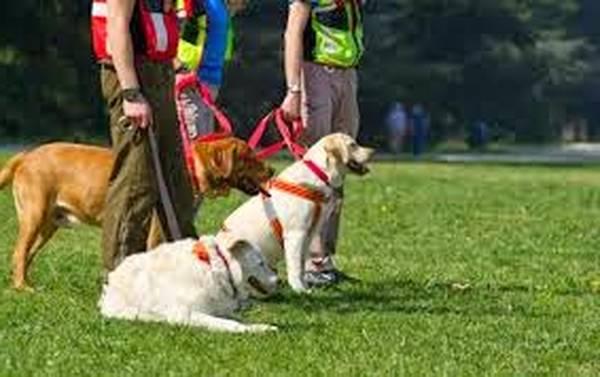 Emission dressage chien cesar : centre de dressage pour chien calvados