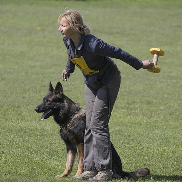 technique de dressage de chien pdf
