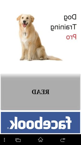 dressage de chien montreal