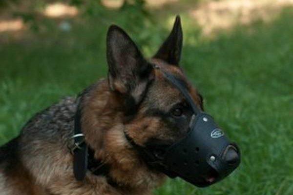 Martinet de dressage pour chien / accessoire dressage petit chien