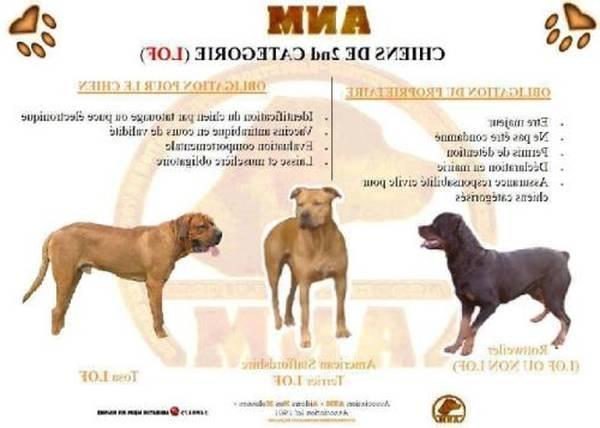 Tapis dressage chien pour dressage chien de garde