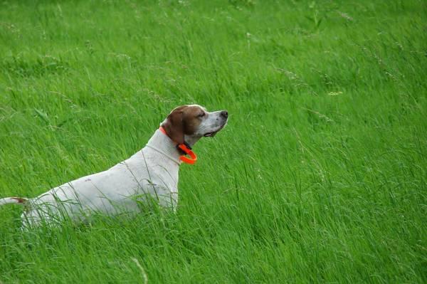 reportage dressage chien