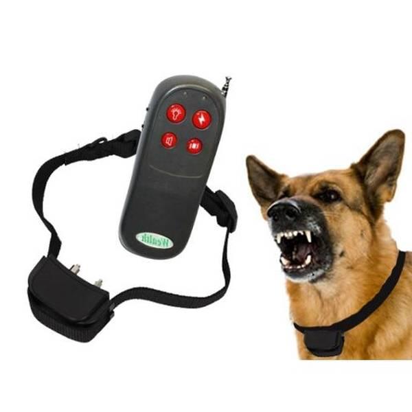 dressage chien manosque