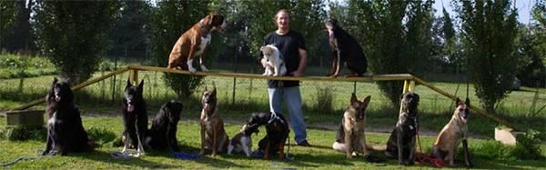 chien rottweiler dressage