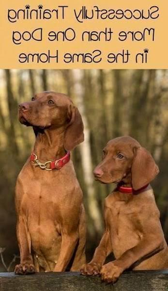 dressage chien gard tarif