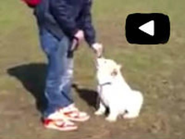 seance de dressage chien