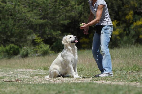 recompense chien dressage