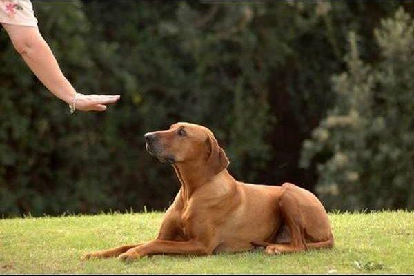 Dressage chien aubagne et kit dressage chien