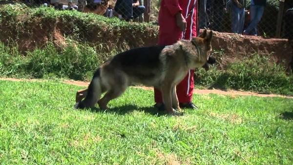 dressage chien 49