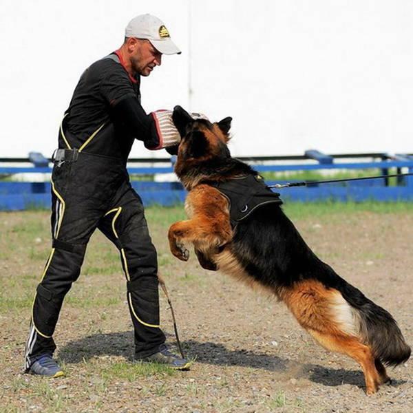 dressage chien nimes