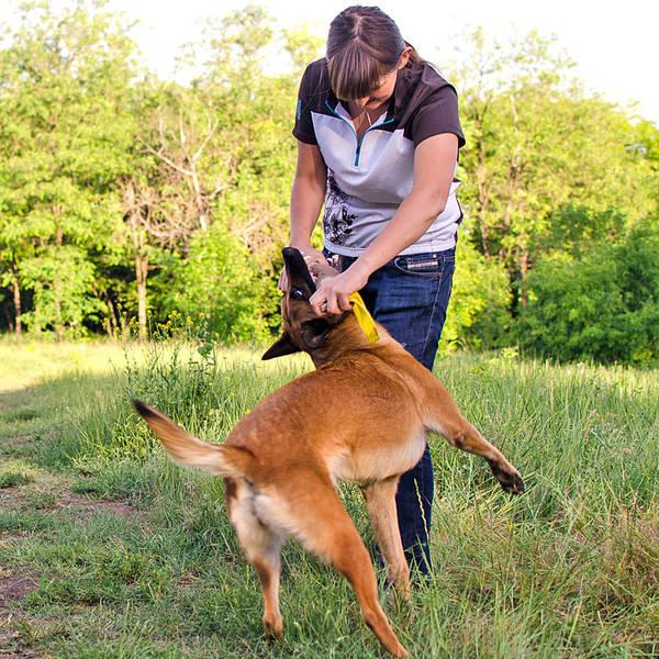 dressage chien de chasse courant