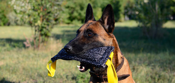 Dressage chien nancy et dressage chien beziers tarif