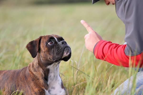 Dressage de chien en seine et marne ou pochette dressage chien