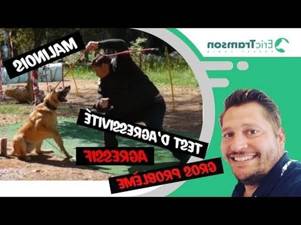 prix dressage chien d arret