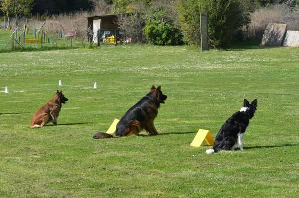 Ecole dressage chien rive sud pour dressage chien ardeche