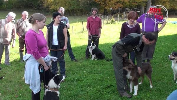 Dressage chien saint marc / site de dressage pour chien