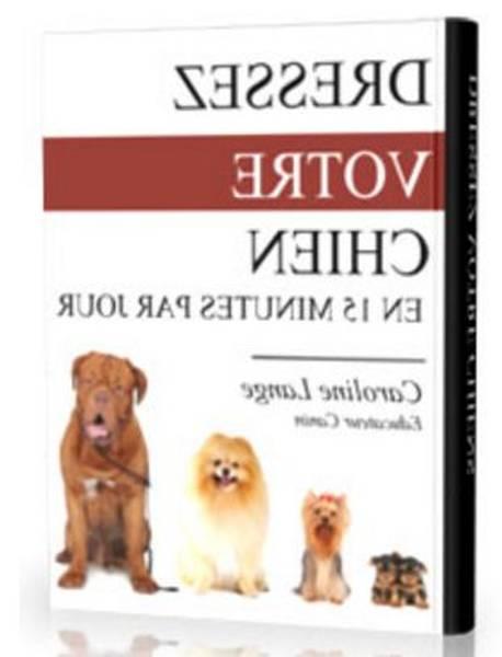 Dressage de chien berger allemand / materiel dressage chien