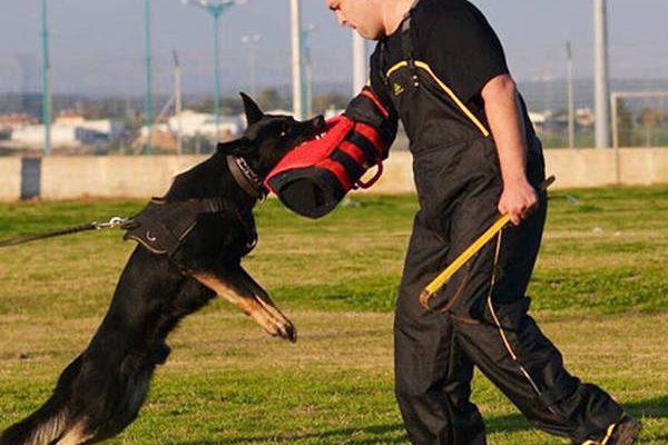 Dvd dressage chien d arret et dressage de chien rive sud