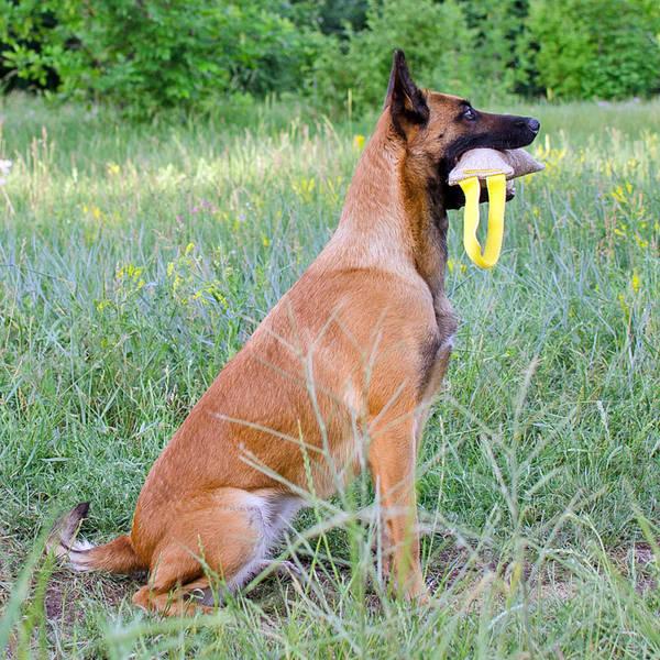 Exercice chien dressage : dressage chien truffier vaucluse