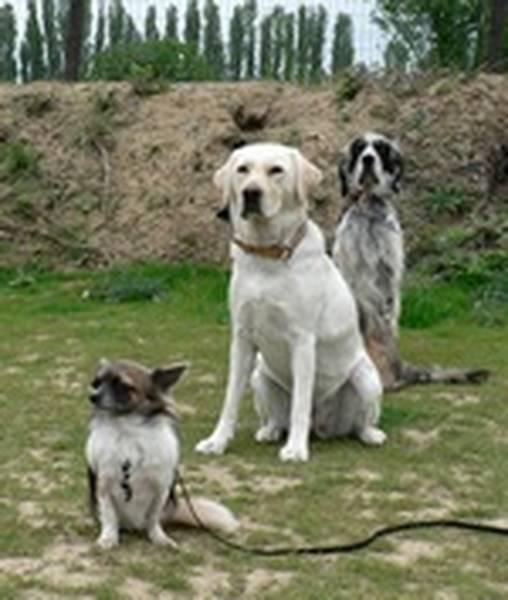 Dressage chien gendarmerie gramat / dressage chien loverval