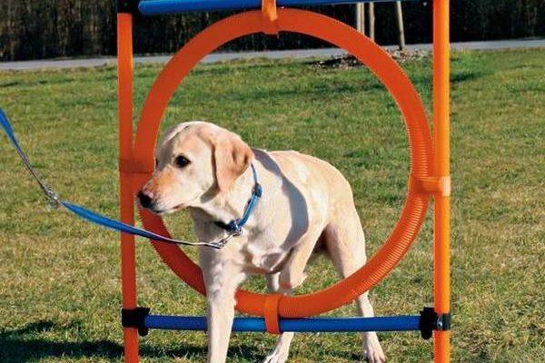 Dressage de petit chien : accessoire chien dressage