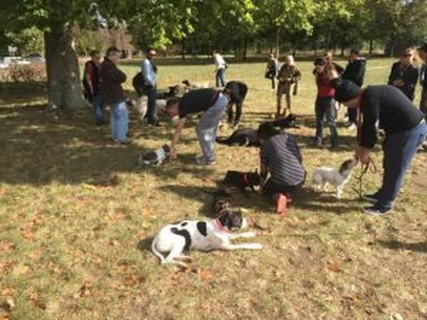 activité de dressage des chiens au mordant