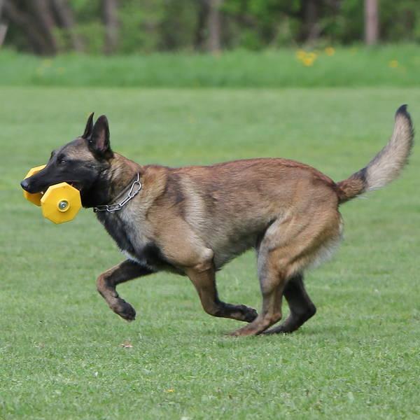 dressage chien argonay