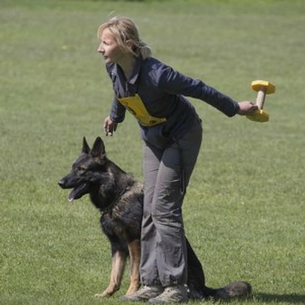 langage dressage chien